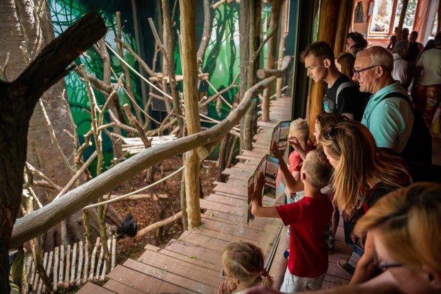 Expeditie Bonobo houtsconstructie