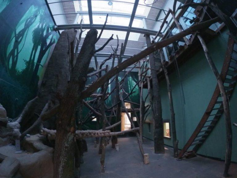 Planckendael bonobo constructie