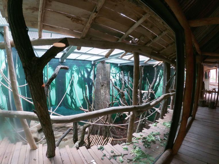 Expeditie Bonobo houtsconstructie uitkijkterras